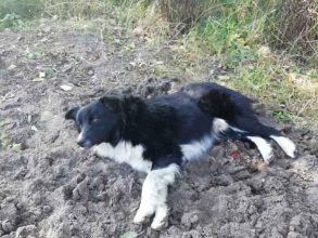 Брянцы пытаются спасти измученную прошедшим Чечню хозяином собаку