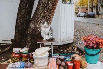 В Брянске сфотографировали кота-продавца
