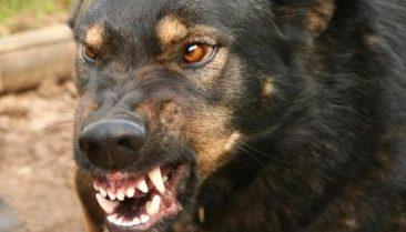 В Погаре охотничья собака на улице напала на девочку