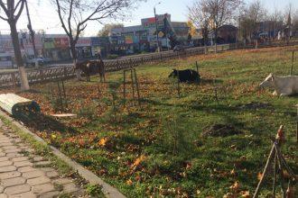 В Брянске коровы устроились на отдых возле «Свенской ярмарки»