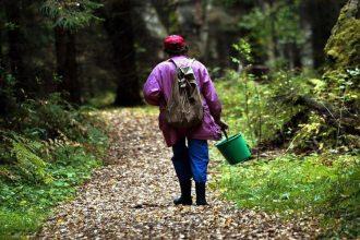 В Новозыбкове нашлась заблудившаяся в лесу 75-летняя пенсионерка