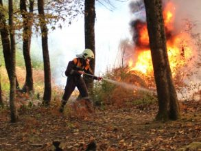 Под Навлей тушат лесной пожар на площади 1 га