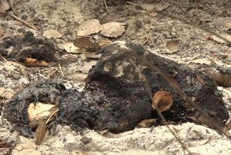Лес под Брянском отравляют озера мазута