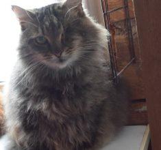 В Брянске ищут любящего хозяина одноглазому коту
