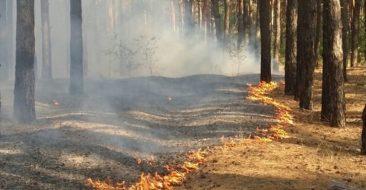 На Брянщине лесные пожары связали с аномальным теплом