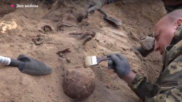 В Жуковке нашли останки погибших в годы войны