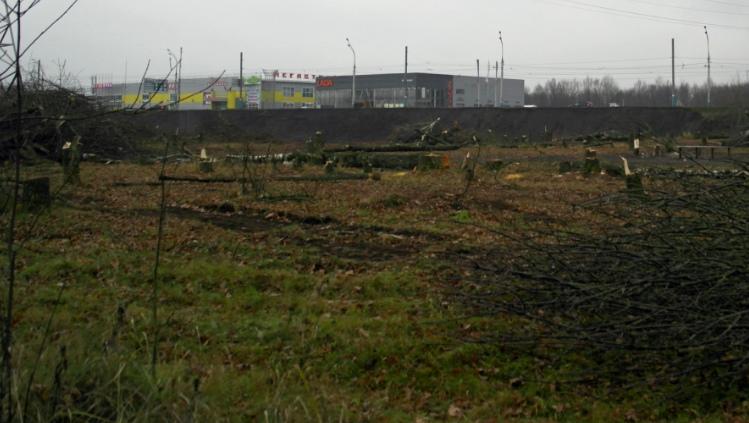 В Брянске у Мутного озера начали прорубать просеку для новой дороги