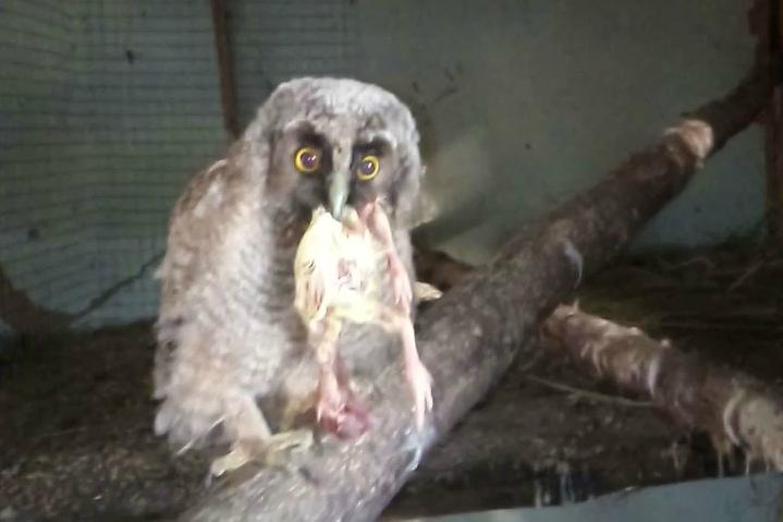 Брянская спасительница диких птиц просит поддержки для пернатых