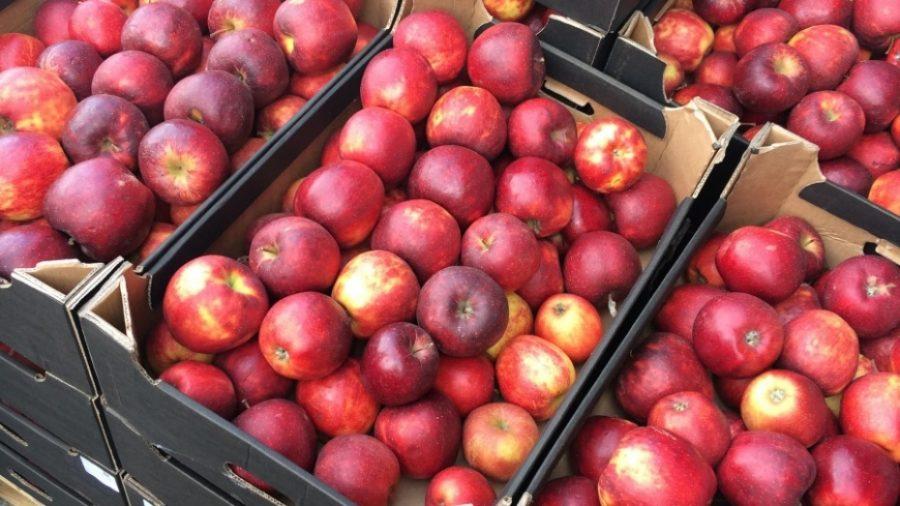 На Брянщине забраковали 34,5 тонны яблок, перца и томатов