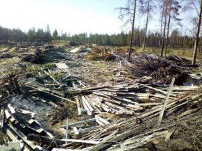 Под Брянском обнаружили три лесных свалки