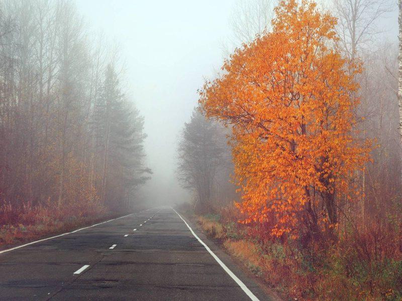Небольшой дождь и туман обещают на Брянщине во вторник