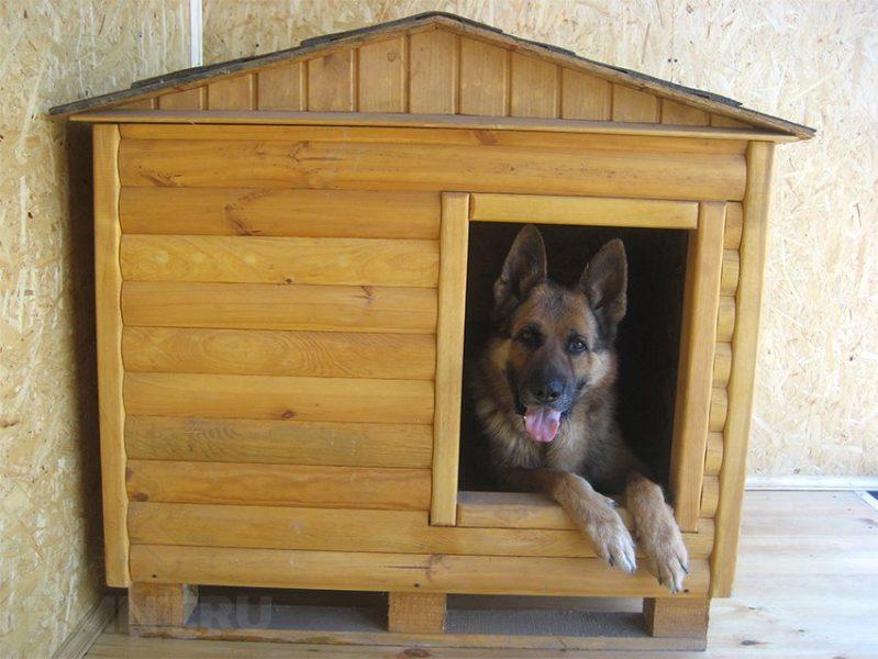 Брянцам предложили построить будки для бездомных собак