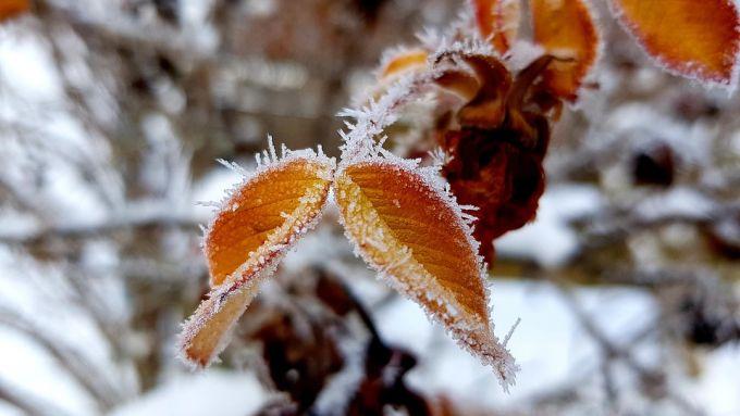 На Брянщине во вторник похолодает до -13