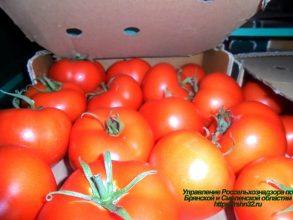 На Брянщину не впустили 20 тонн томатов с личинками