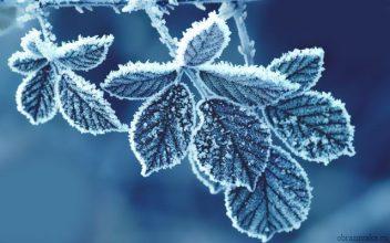 До 13 градусов мороза ожидается в понедельник на Брянщине