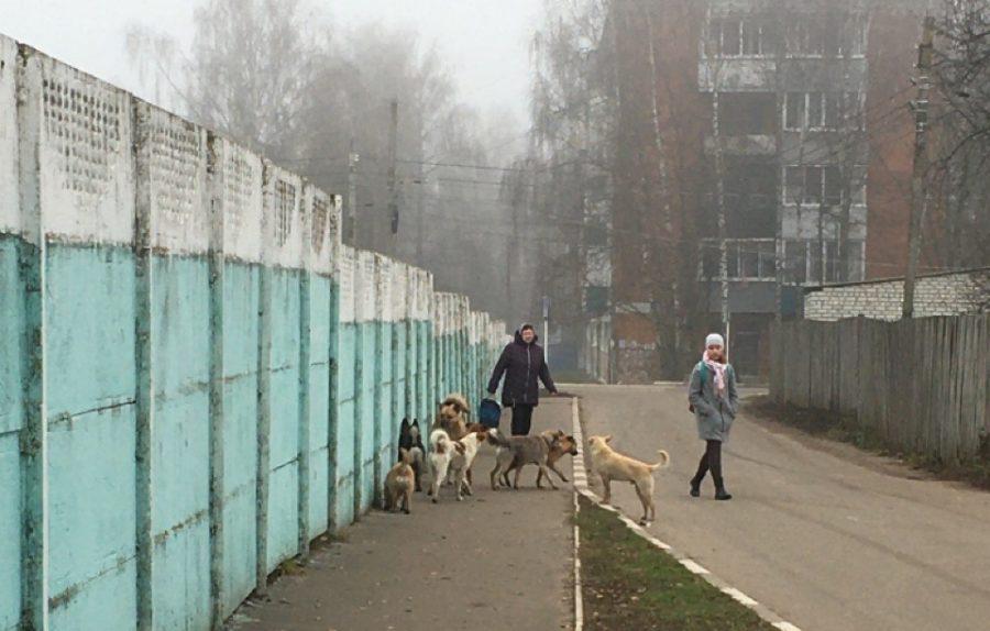 Прокуратура проверит сообщение о нападении собак в Стародубе