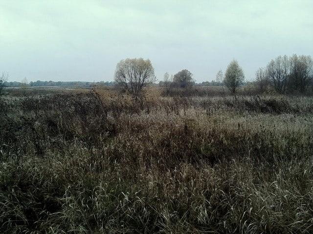 В Брянской области нашли 280 гектаров пустующей земли