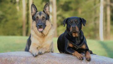 В Новозыбкове оштрафовали недобросовестных владельцев собак