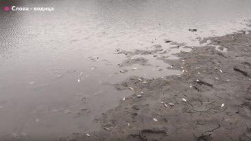 Прокуратура заинтересовалась гибелью рыбы в клинцовском озере
