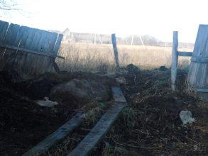 В Брянской области фермер закапывал мертвых поросят в навоз