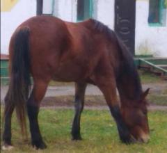 В Брянске ищут хозяев заблудившихся лошадей