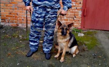 В Дятьковском районе собака раскрыла кражу мопеда