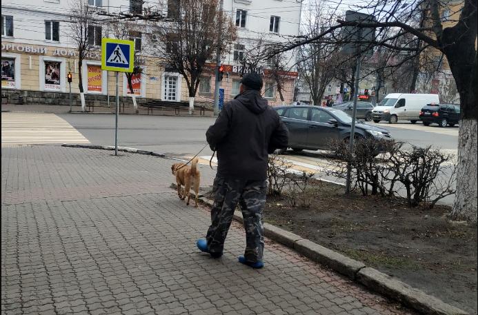 Соцсети: В Брянске собаки напали на 14-летнего мальчика