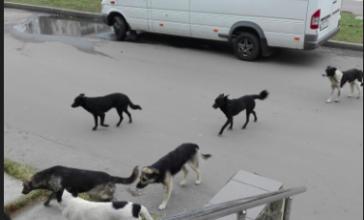 В Брянске предложили штрафовать за кормление бродячих собак