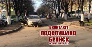 В Брянске стая собак оккупировала остановку у школы №51