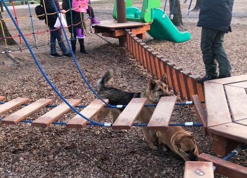 В Брянске детскую площадку в Майском парке оккупировала стая собак