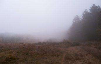 Брянцам в среду пообещали туман и дождь