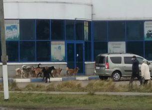 В Дятьково стая бродячих собак захватила магазин «Светофор»