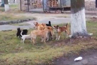 В Клинцах стая агрессивных собак захватила городской парк