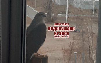 Брянец сфотографировал необычную птицу