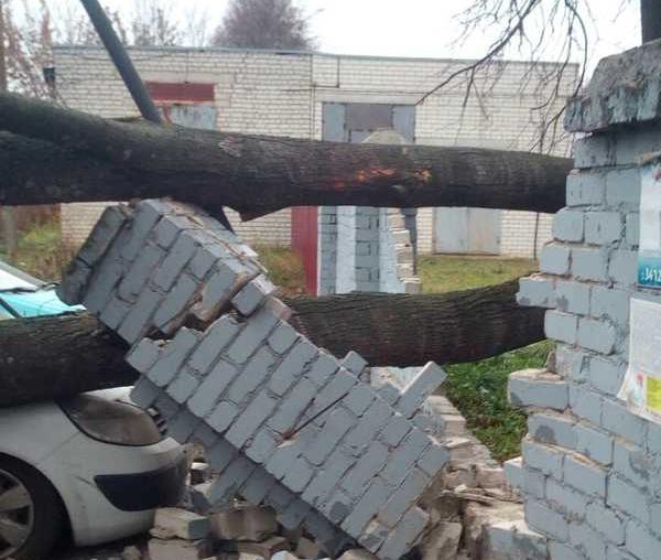 В Брянске возле облбольницы дерево придавило иномарку