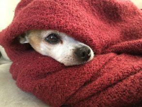 Жители Карачева пожаловались на собачий холод в квартирах