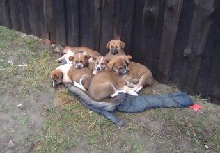 В Брянске на дачах погибают семь красавцев-щенков