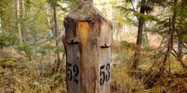 На Брянщине появится первый в стране памятник лесоустроителям