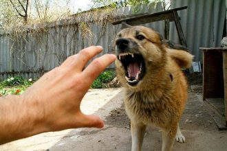 Брянцам рассказали, как одним словом отпугнуть собаку