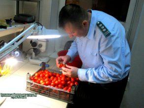 Около 80 тонн зараженных овощей и фруктов пытались ввезти на Брянщину