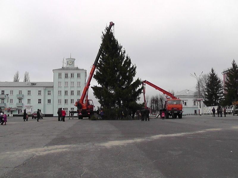 В Новозыбкове выбрали главную елку города