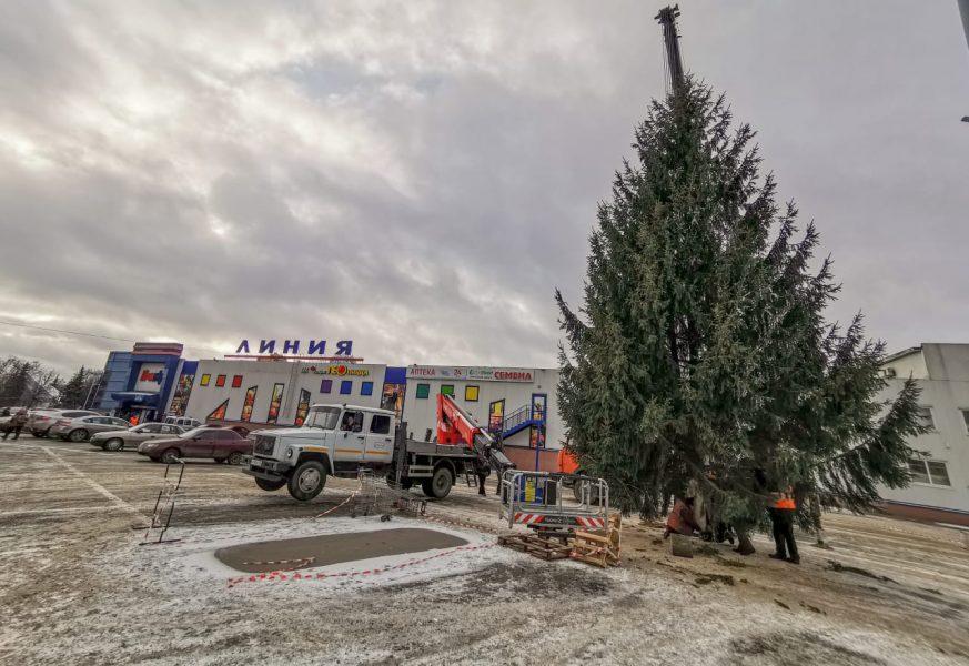 В Брянске возле «Линии» установили новогоднюю ёлку