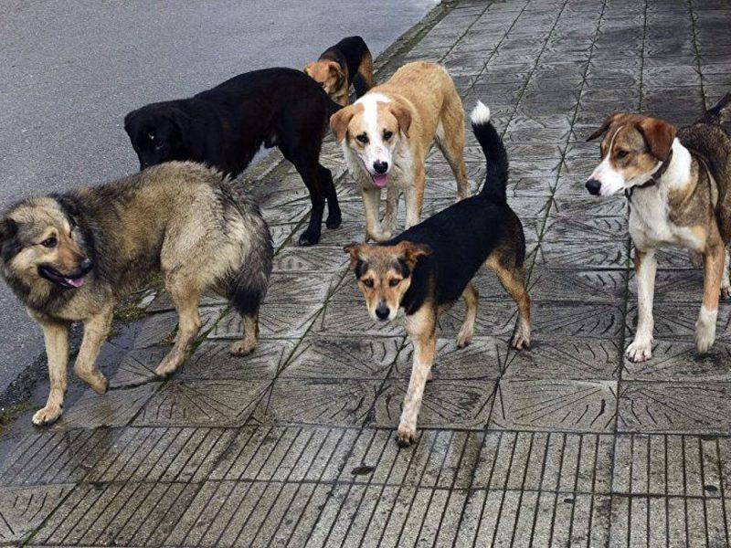 В Брянске агрессивная стая собак оккупировала школу №9