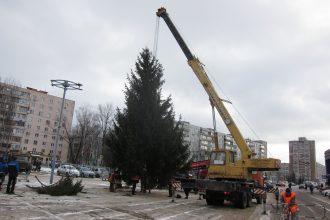 В Советском районе Брянска установят 6 живых ёлок