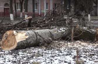 В брянском сквере Камозина спилили 13 деревьев