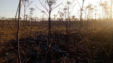 В Суземском районе заросло травой 5,2 га сельхозземель