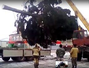 В центре поселка Локоть установили новогоднюю ель