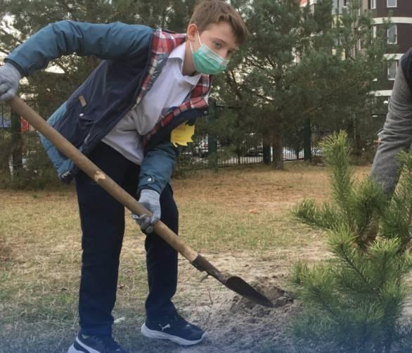 В Брянске у гимназии №5 появилась аллея сосен