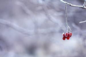 В Брянской области потеплеет до -7