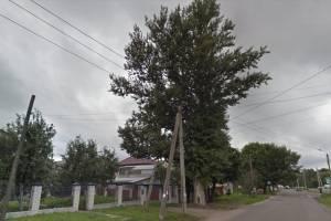 В Брянске больше года не могут добиться уборки опасного дерева